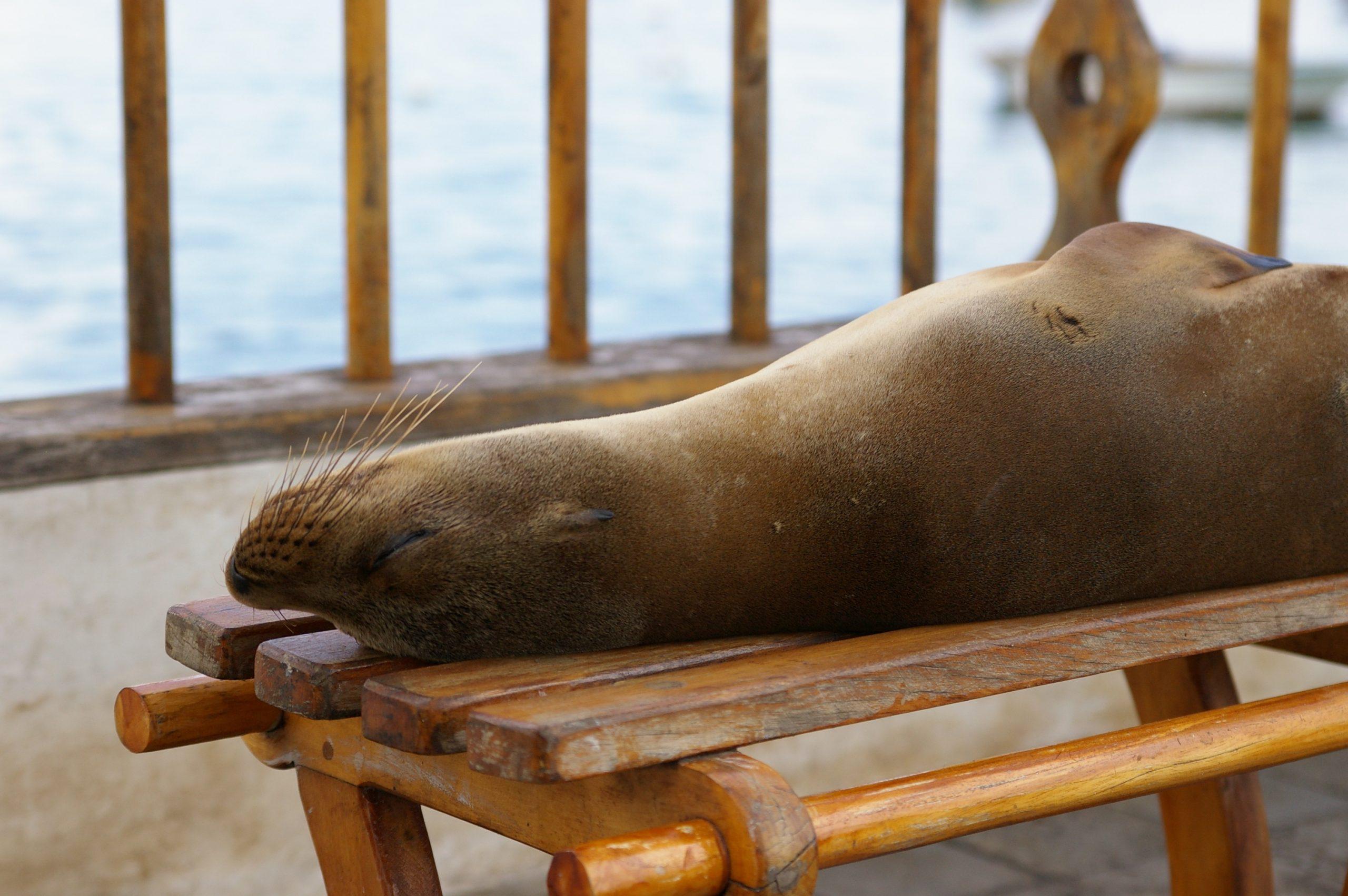 Galapagos Inseln – einer der besten Tauchplätze weltweit!