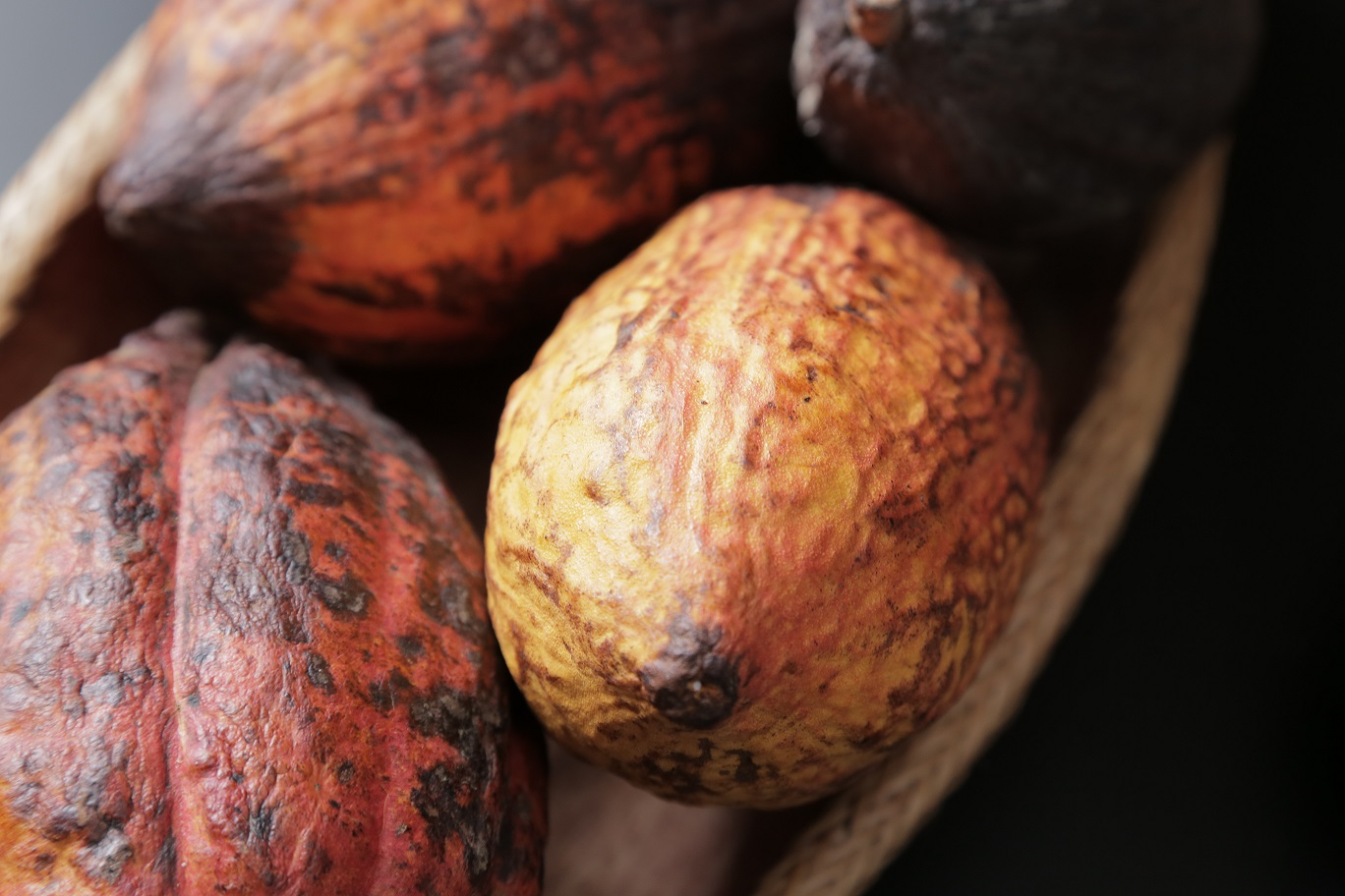 Schokoladen-Tour in Costa Rica